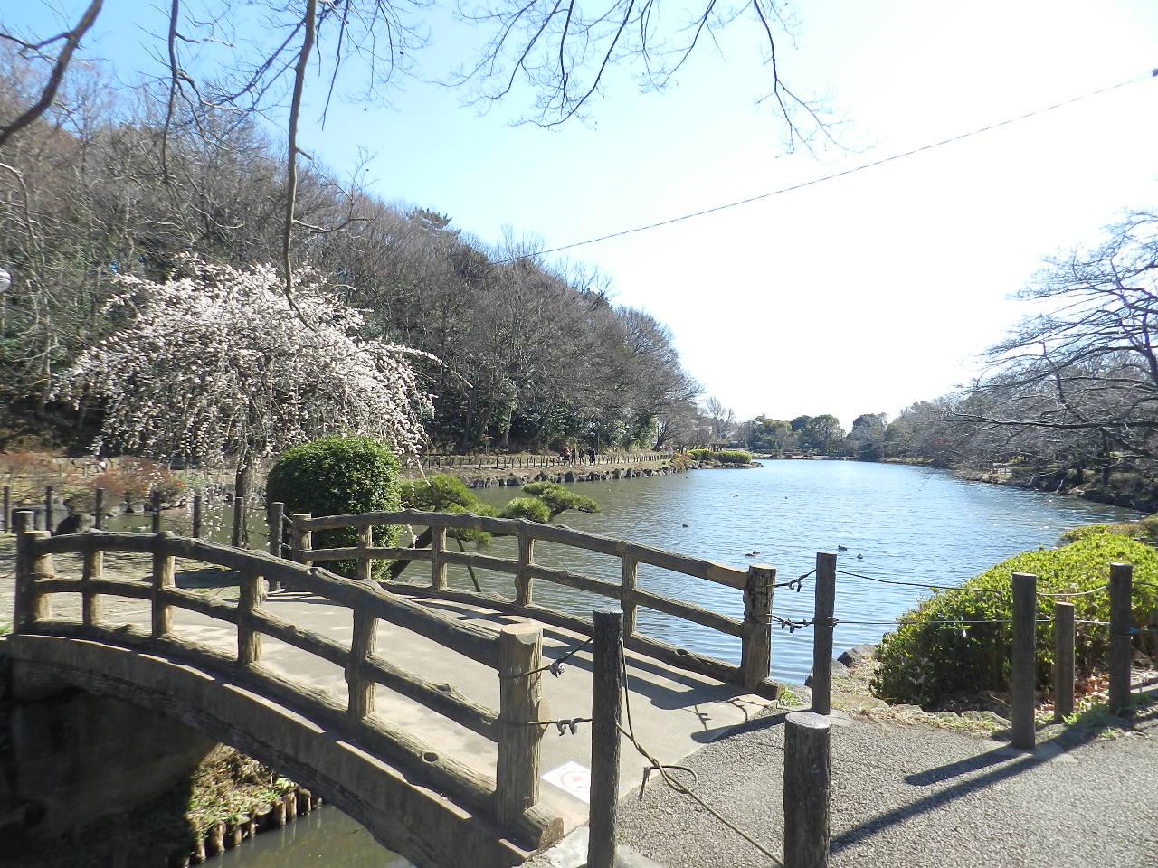 周辺(2016年2月) じゅん菜池緑地